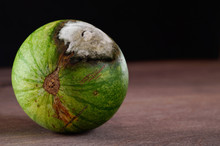 Green Watermelon With A Spoile...