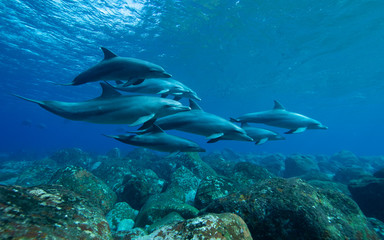 dolphins underwater photography