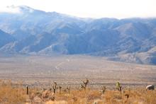 Mojave Desert National Preserve Barren Landscape With Joshua Trees And Massive Boulders