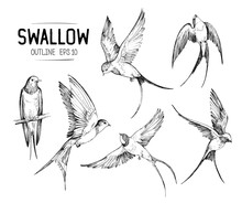 Set Of A Flying Swallows. Hand...