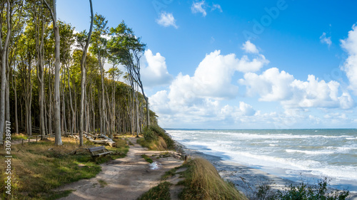 Obraz Forrest by the Baltic sea in Germany - fototapety do salonu