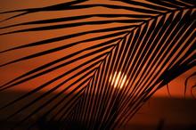 Palm Leaf Tropical Sunset