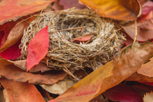 Small Nest Among The Leaves