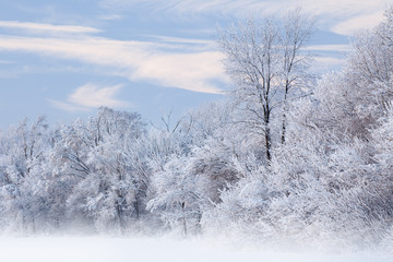Fototapeta Zima Winter landscape of a snow flocked forest, Fort Custer State Park, Michigan, USA
