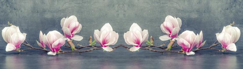 Prekrasna cvatuća magnolija grana izolirana na sivoj antracit pozadini panoramskog natpisa dugo