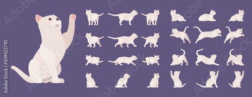 Obraz na płótnie White pedigree cat set