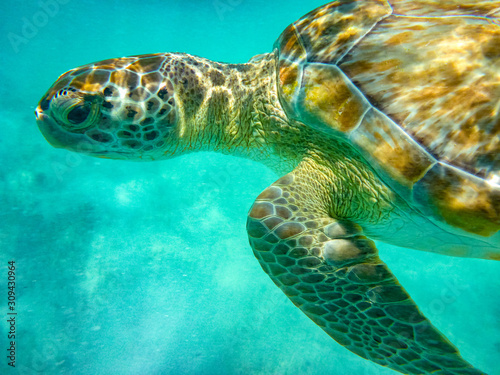 Photo Swimming with the Turtles at Hooper's Bay ,Exuma