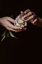 Hand Touching A Peony, On Dark Background