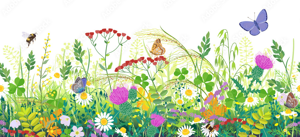 Fototapeta Seamless Border with Summer Meadow Plants  and Insects