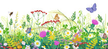 Seamless Border With Summer Meadow Plants  And Insects