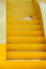Yellow Stairs And Cat