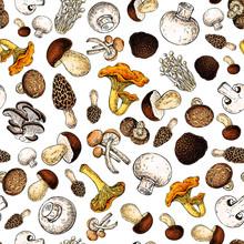 Mushroom Hand Drawn Vector Sea...