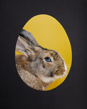 Cute Rabbit In A Egg Shaped Hole. Easter Bunny.