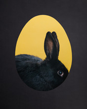 Cute Black Rabbit In A Hole. Easter Bunny.