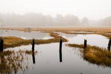 Swampy Area In The Fall In Maine, New England