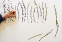 Artist Drawing Leaves Patterns On Paper