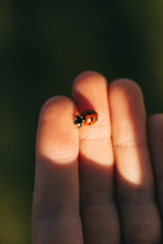 Detail Of A Tiny Ladybug On The Hand