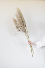 Minimalist Monochromatic Pampas Grass In Hand