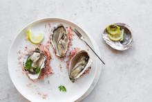 Oysters On Pink Salt