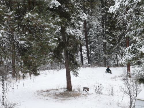 Obraz na plátně  Dashing through the snow - the forest be with you sledding