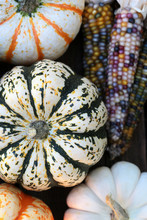 An Autumn Collection Of Ornamental Corn, Pumpkins And Squash