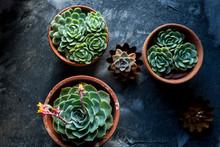 Patio And Indoor Succulents