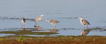 Heron Group