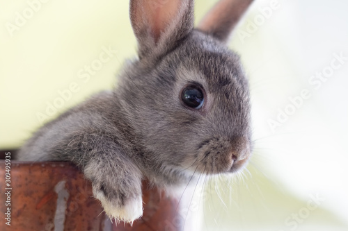 Photo Close up of a bunny