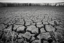Greyscale Of A Parched Land Surrounded By Greenery With A Blurry Background