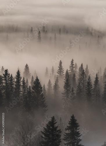 wysoki-kat-widzenia-zimozielonego