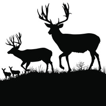 Vector Silhouettes Of Two Large Mule Deer Bucks.