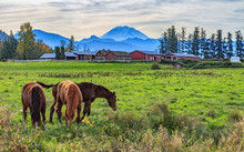 Horses On A Pasture With Mt Ra...