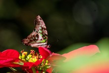Green Butterfly Rarely Stops O...