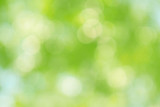 Beautiful green bokeh of tree leaves nature out of focus background