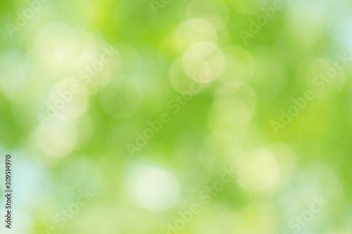 fototapeta na drzwi i meble Beautiful green bokeh of tree leaves nature out of focus background