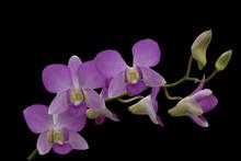 Beautiful Light Purple  Orchid...