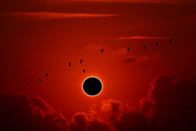 Phenomenon Of Partial Sun Eclipse Over Silhouette Birds Flying And Sunset Sky