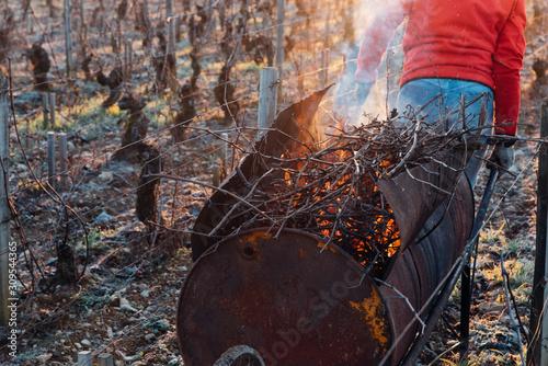 un ouvrier viticole tâcheron travaillant dans les vignes avec une brouette en fe Canvas Print