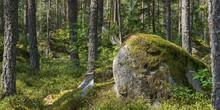 Großer Findling In Einem Schwedischen Fichtenwald
