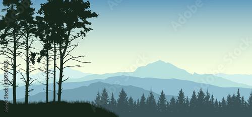 Fototapeta Forest trees landscape. Evergreen coniferous nature background. Pine, christmas tree, spruce obraz