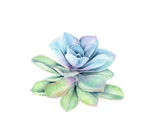 Watercolor Succulent Plant. Co...