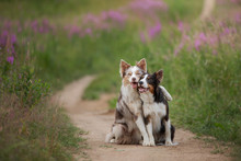Two Dogs Hugging Together For ...