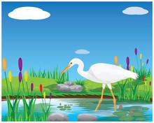 White Heron In Pond Vector Design