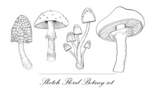 Mushrooms Set Hand Drawn Vector Illustration. Sketch Mushroom Drawing Isolated On White Background. Organic Vegetarian Product. Great For Menu, Label, Product Packaging, Recipe