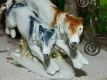 Closeup Muzzle Greyhounds. Swi...
