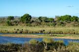 Elephant, Riviere Sabie, Parc national Kruger, Afrique du Sud