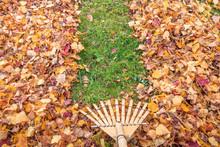 Raking Fall Leaves From Lawn I...