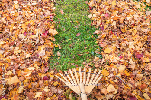 Fotografía Raking fall leaves from lawn in autumn with a bamboo leaf rake