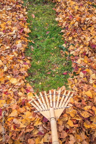 Valokuva Raking fall leaves from lawn in autumn with a bamboo leaf rake