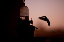 Humming Bird Watching Sunset